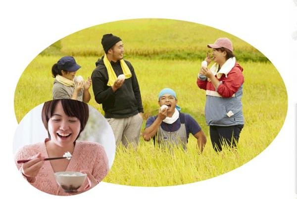 熊本ヒノヒカリ(ひのひかり)が楽天で人気 送料無料でお買い得!